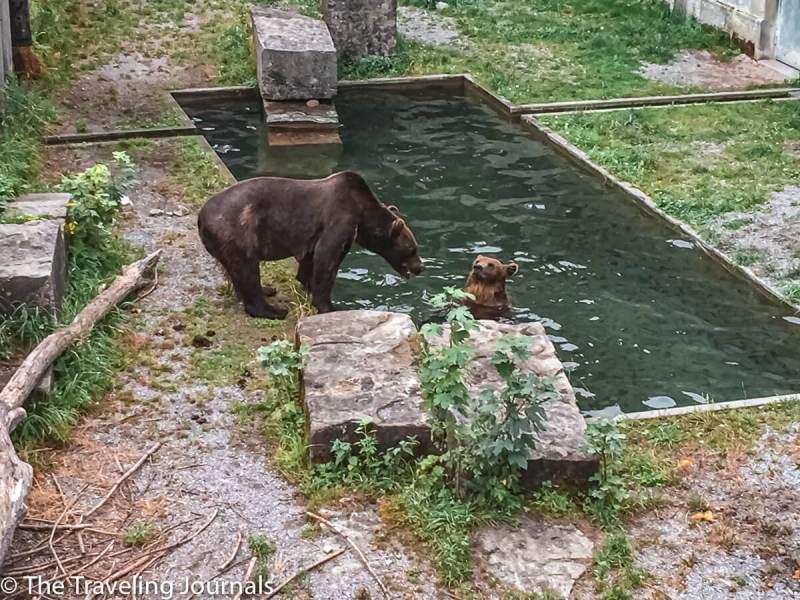 Bern bear Park- switzerland- Berna- Osos- parque osos- bears Bern